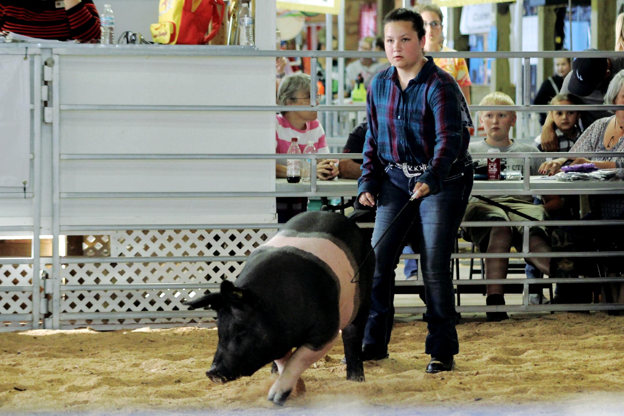 Swine Show Photos