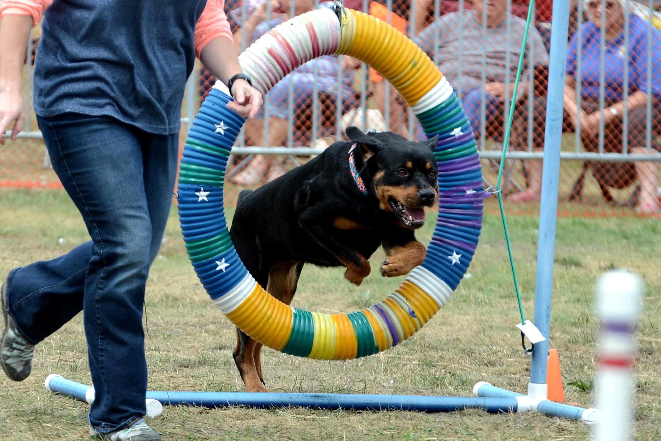 Dog Agility Show Photos