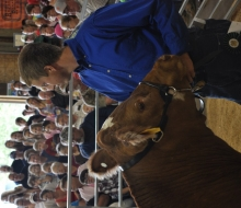 4H kids shows market livestock etc