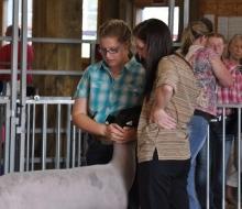 lamb show 4