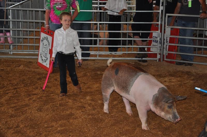 swine 4