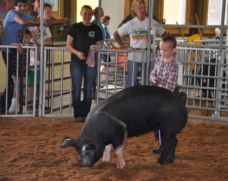 swine 9
