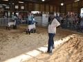 lamb show 5