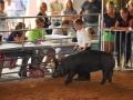 swine 11