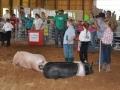 swine 14