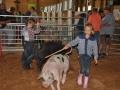 swine 8