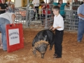swine gone wild