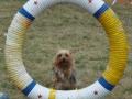 dog hoop love