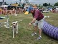 dog show 13