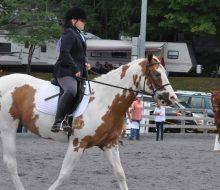 horses dressage equestrian 4h horses kids