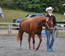 horse tues 4