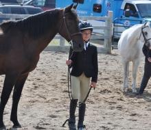 horses mailie 1