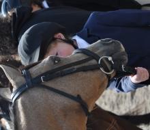 horses shy