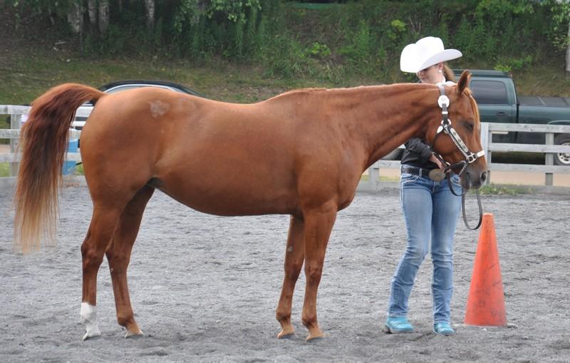 horse tues 3