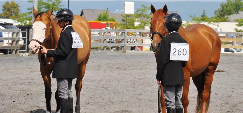 horses 1a
