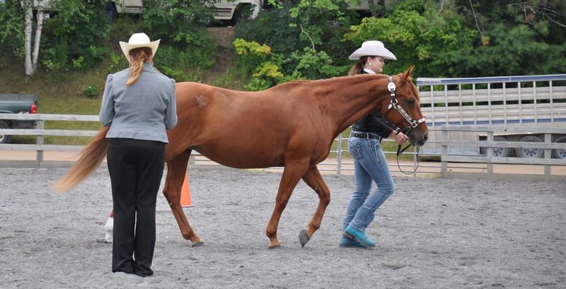 horses tues 5