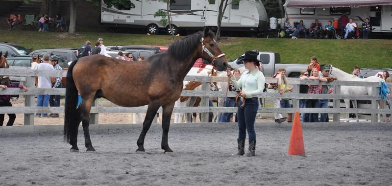 horses tues 6