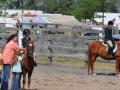 horses 8