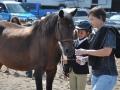horses mailie 4
