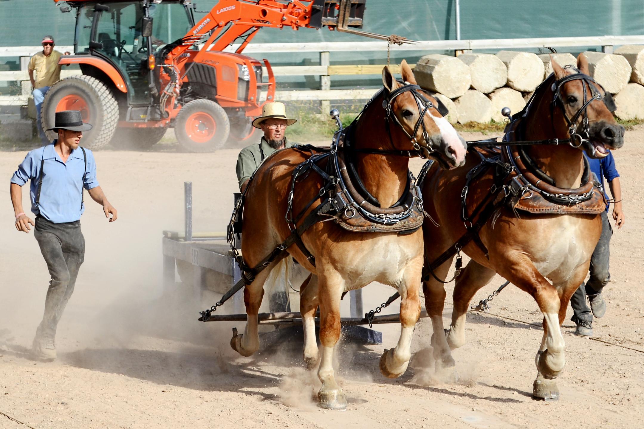 Horse & Pony Pulls Photos